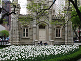 Chicago-Water-Tower-Spring-Blooms.jpg