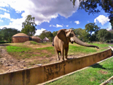 Johannesburg-Zoo-South-Africa.jpg