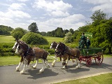 Pollok-Country-Park_-horses-and-cart.jpg""