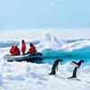 best-nature-lindblad-penguins.jpg