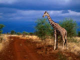 national-park-kenya.jpg